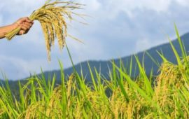 किसानों के लिए बनाई प्रधानमंत्री फसल बीमा योजना राफेल से भी बड़ा घोटाला क्यों है?