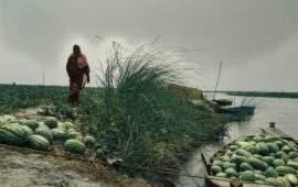 तरबूज किसान: वे जो नदी से कभी नाउम्मीद नहीं होते