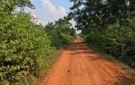 कैमूर में 'टाइगर रिजर्व' को लेकर आदिवासियों को सता रहा उजड़ने का डर
